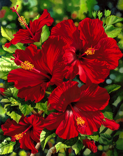 Garry Palm Red Hibiscus